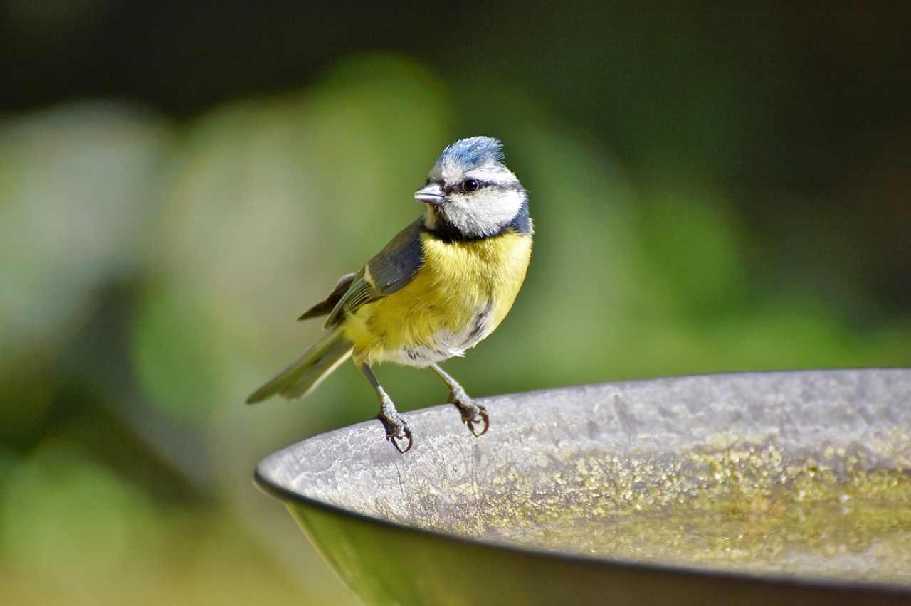 Vogeltränke mit Solar