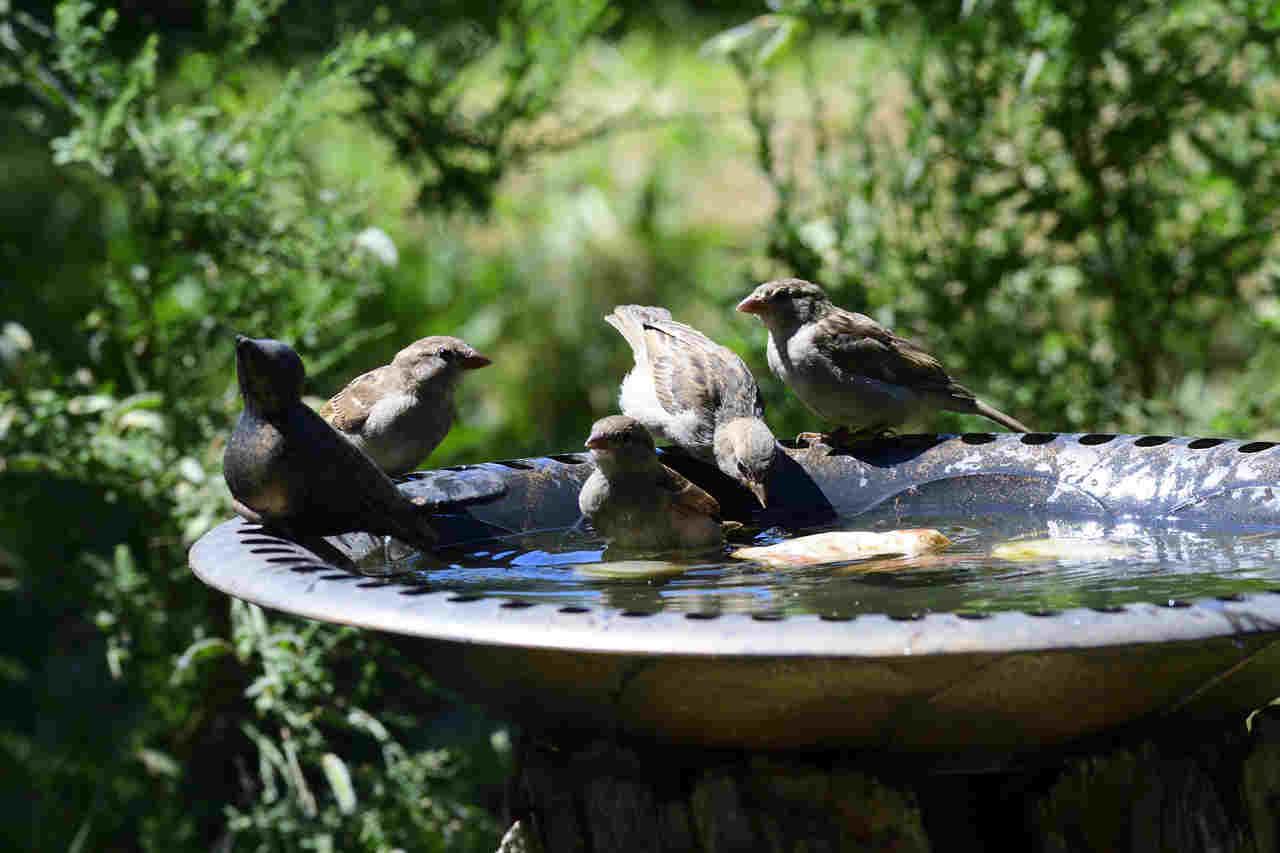 Vogeltränke Solar